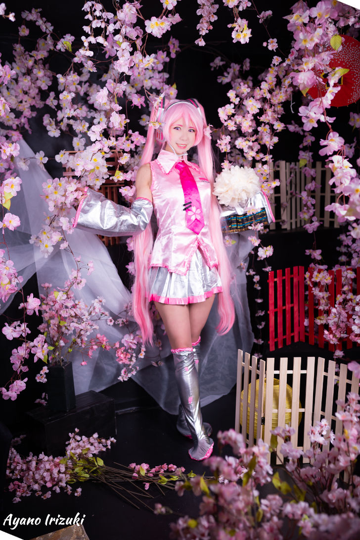 Sakura Miku from Vocaloid